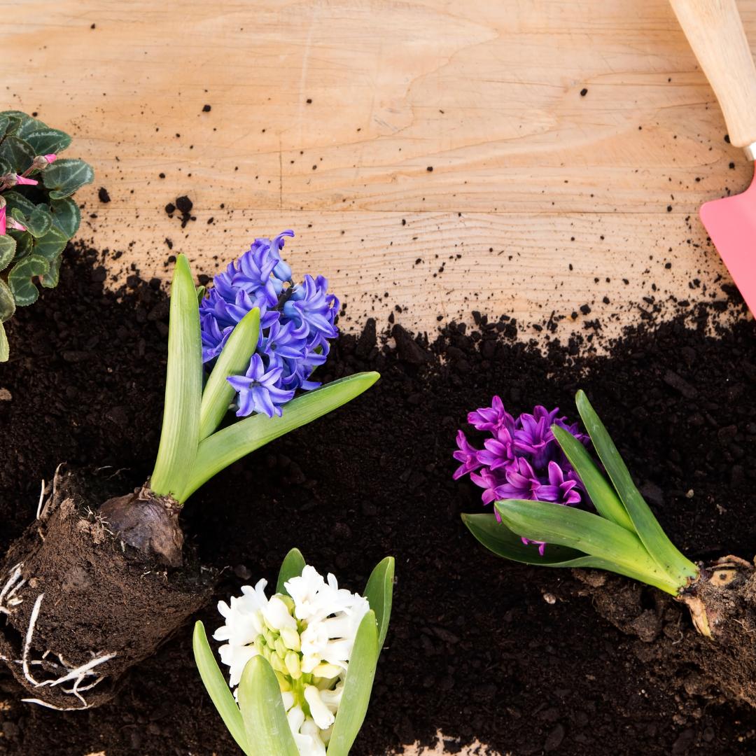 Özellikle havaların ısınması ile birlikte saksı çiçeklerinde sineklenme oluşur. Bu günlerde en çok karşılaştığımız sorulardan bir tanesi 'çiçek toprağı neden sineklenir?'
